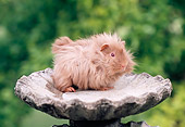 ROD 02 GR0025 01