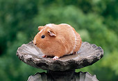 ROD 02 GR0026 01