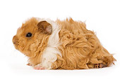 ROD 02 JE0001 01