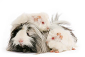 ROD 02 JE0005 01