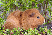 ROD 02 JE0009 01