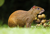 ROD 02 MC0001 01