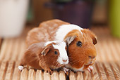 ROD 02 PE0003 01