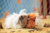 ROD 02 PE0005 01