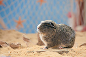 ROD 02 PE0006 01
