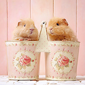 ROD 02 XA0003 01