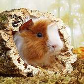 ROD 02 XA0009 01
