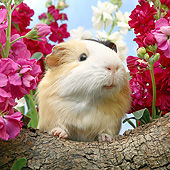 ROD 02 XA0018 01