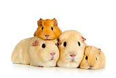 ROD 02 KH0001 01