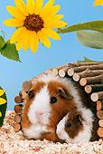 ROD 02 KH0002 01