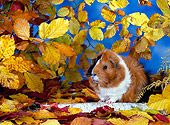 ROD 02 KH0005 01