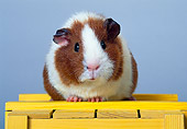 ROD 02 KH0007 01