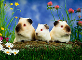 ROD 02 KH0008 01