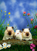 ROD 02 KH0009 01