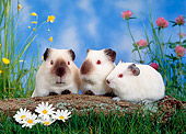 ROD 02 KH0010 01