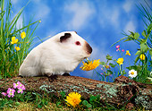 ROD 02 KH0014 01