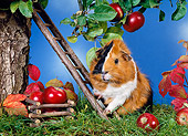 ROD 02 KH0020 01