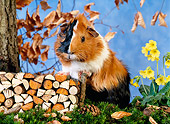 ROD 02 KH0021 01