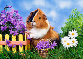 ROD 02 KH0025 01
