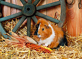 ROD 02 KH0029 01