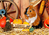 ROD 02 KH0031 01
