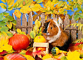 ROD 02 KH0038 01