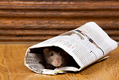 ROD 03 JE0001 01