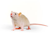 ROD 03 RK0002 03