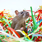ROD 03 XA0002 01