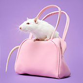 ROD 03 XA0005 01