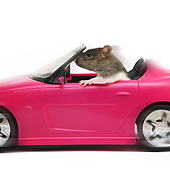 ROD 03 XA0009 01