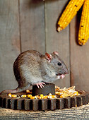 ROD 03 KH0005 01