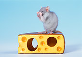 ROD 03 KH0008 01