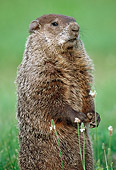 ROD 05 GR0002 01