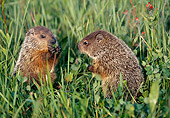 ROD 05 LS0002 01