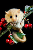 ROD 06 GL0003 01