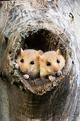 ROD 06 GL0007 01