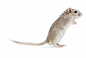 ROD 06 JE0003 01