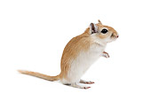 ROD 06 JE0004 01