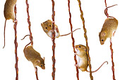 ROD 06 KH0010 01