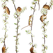 ROD 06 KH0011 01