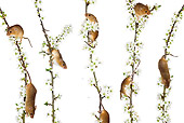 ROD 06 KH0012 01
