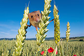 ROD 06 KH0018 01