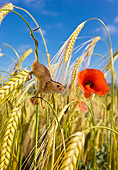 ROD 06 KH0019 01