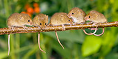 ROD 06 KH0024 01