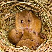 ROD 06 KH0029 01