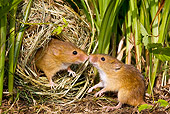 ROD 06 KH0030 01