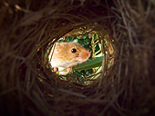 ROD 06 KH0031 01