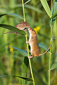 ROD 06 KH0036 01