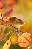 ROD 06 KH0047 01
